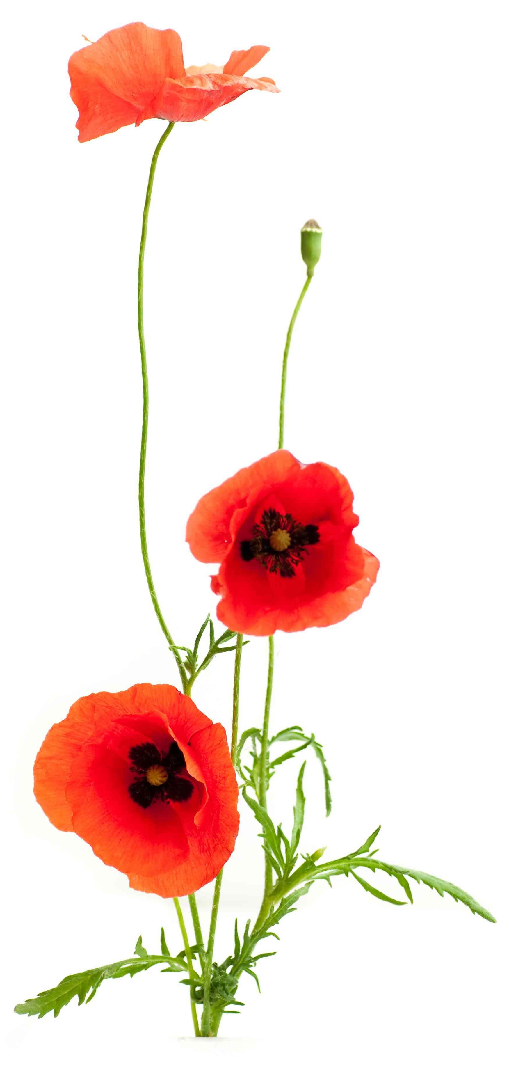 Revitalisation paris dans le loft de fabienne ruby boukabou ruby boukabou - Fleurs des champs blanches ...